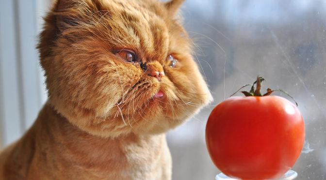 Katze Gemüse